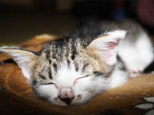 ペット不可賃貸で猫を飼った場合の退去費用・リノベーション賃貸郡山