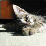 子猫の爪とぎしつけ - リノベーションならオーダーメイド賃貸郡山