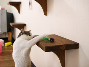ペット用リフォーム猫棚 - リノベーションならオーダーメイド賃貸郡山