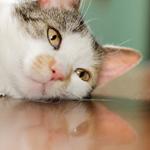 ペット不可で猫を飼った場合、退去時の修繕費用