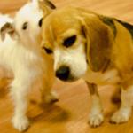 ペット用床材で足腰への負担を軽減