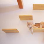 猫棚リノベーションで運動不足解消に!