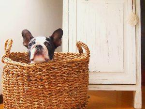 ペットと快適リノベーション住宅