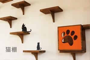 縦移動が大好きな猫ちゃんもストレス解消!壁面に猫棚の設置
