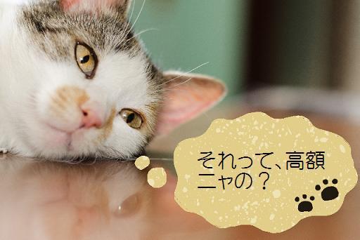 ペット不可賃貸で猫を飼った場合の退去リフォーム費用について