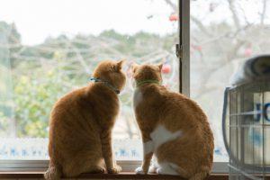 猫と快適に暮らすプチリノベーション