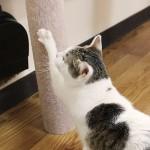 賃貸でも安心!猫ちゃんが爪とぎできる柱をリノベーションで設置しました。
