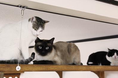 猫ちゃんも大満足の賃貸暮らし