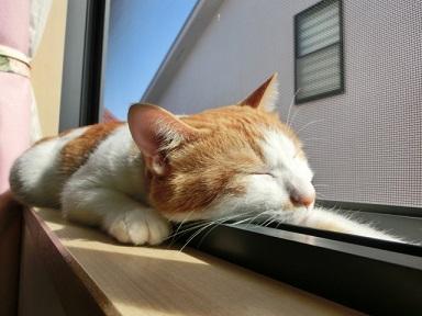郡山市の猫OK物件の紹介
