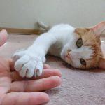 猫も人も快適に過ごせる部屋