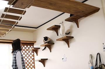 猫棚大好評
