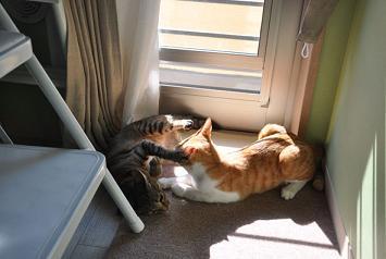 猫への愛情が入居の決め手!